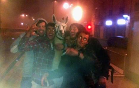 Robaron una llama y la llevaron de copas por las calles en Burdeos