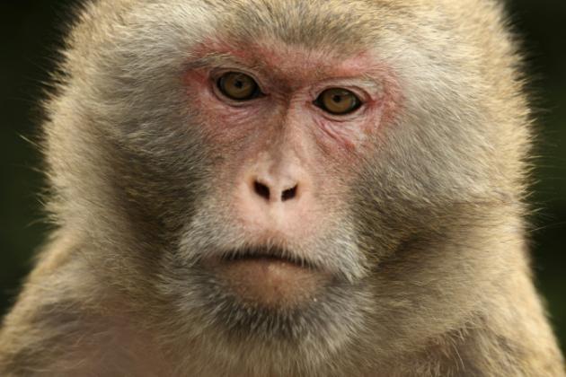 Monos y halcones garantizan seguridad de desfile militar en China