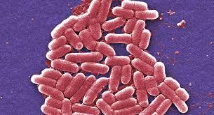 """La """"superbacteria"""" hallada en EEUU podría ser el fin de los antibióticos"""