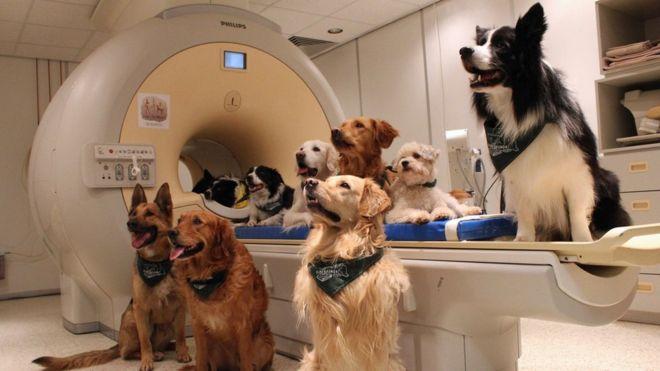 La ciencia comprobó que los perros entienden lo que decimos y cómo lo decimos