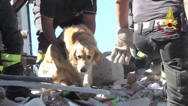 Romeo, el perro que sobrevivió nueve días bajo los escombros del terremoto en Italia