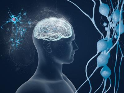 Notable avance científico permitirá curar el alzhéimer