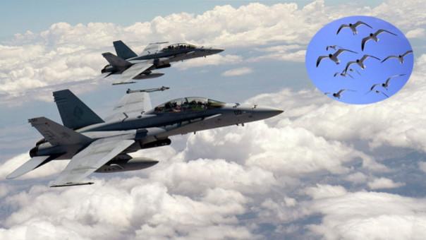Las aves son los peores 'enemigos' de la Fuerza Aérea de EE.UU.