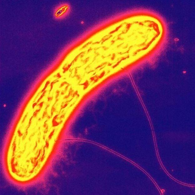 Los impresionantes microbios que comen y defecan electricidad