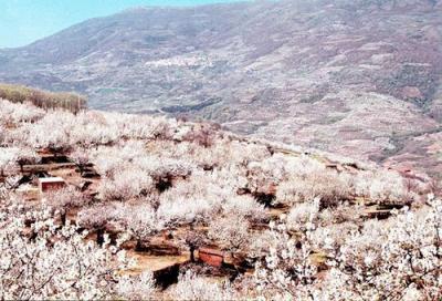 Cerezos en flor o cómo la crisis no roza al maravilloso Valle del Jerte