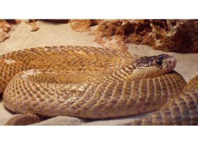 Científicos de Costa Rica crean antídoto contra veneno de serpientes africanas