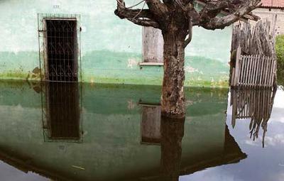 Ruge el Amazonas: las inundaciones en Brasil arrastran tierra adentro a serpientes y caimanes