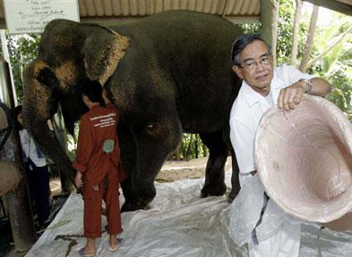Elefanta víctima de mina en Tailandia recibe pata artificial