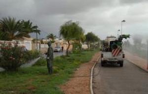 """La invasión de mosquitos """"salvajes"""" atormenta a Alicante"""