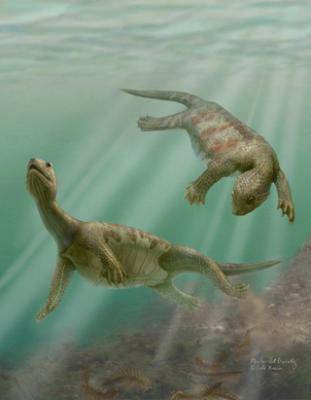 En Polonia hallan huellas de 400 años sobre la evolución de la vida marina a la terrestre