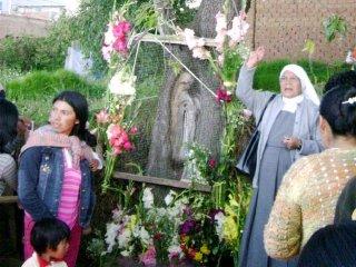 Imagen de la Virgen María aparece en tronco de árbol en Perú