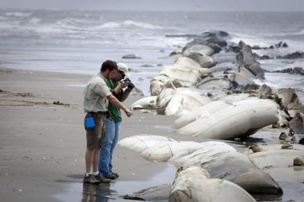Impresionante: El vertido del golfo podría ser de 16 millones de litros diarios