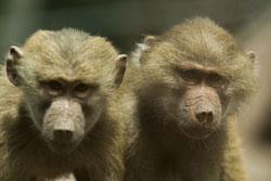 Zoológicos abren todos los días en vacaciones escolares