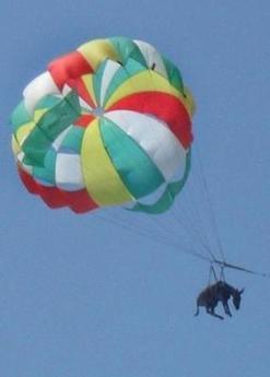 La policía encontró al burro cuyo vuelo sobre el mar escandalizó a Rusia