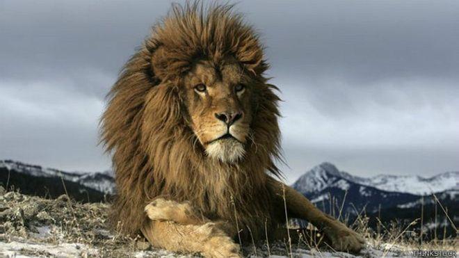 León, el animal que fue víctima de su propio poder