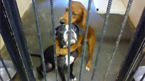 El imponente abrazo entre dos perros que los salvó de la eutanasia