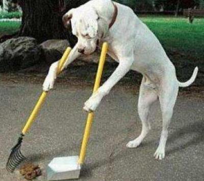 Están cobrando multas en Montevideo por no levantar caca de perros o llevarlos sin bozal; van de 1.661 a 4.153