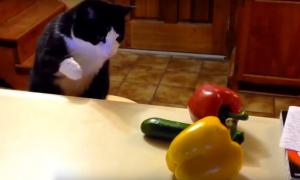 Los pepinos aterrorizan a los gatos y nadie saber por qué