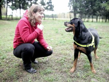 Los perros son capaces de percibir alegría o enojo de los humanos con solo mirarlos