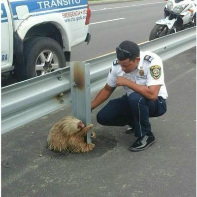 Las imágenes del oso perezoso en Ecuador que dieron la vuelta al mundo
