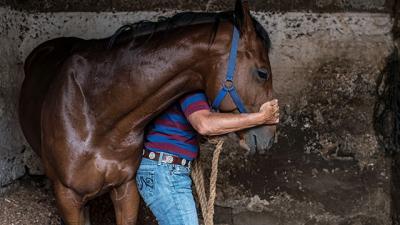 Dejó atado su caballo, y cuando volvió lo habían ejecutado en Durazno