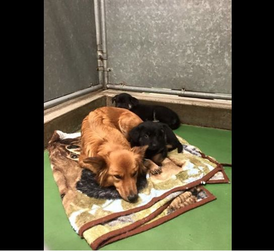 Una perra escapa de su jaula para cuidar de dos cachorros desamparados