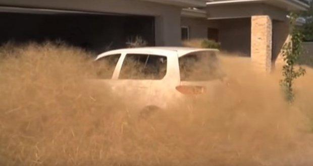 """El """"pánico peludo"""" fuera de control en ciudad australiana"""