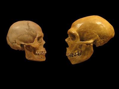 Neandertales y sapiens tuvieron hijos hace más de 100.000 años