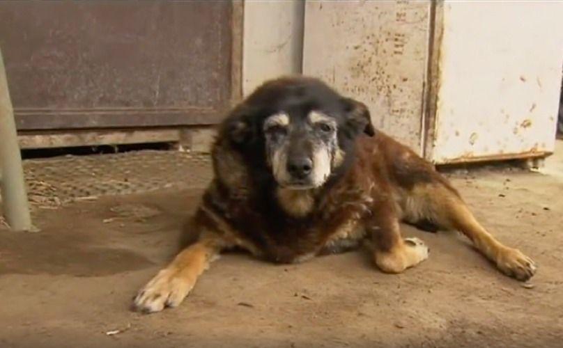 Muere el perro más viejo del mundo a los 30 años de edad