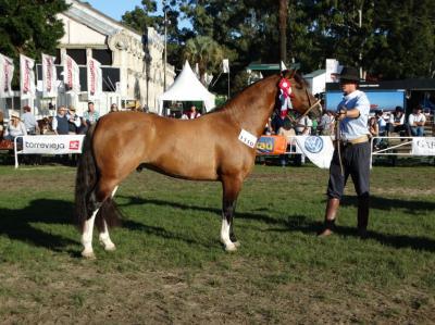 Un argentino invirtió 100 mil dólares en el 80% de un caballo Criollo uruguayo