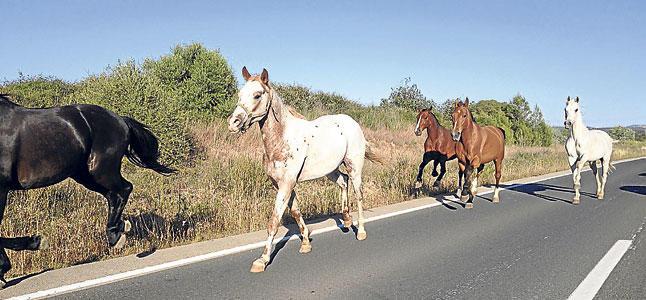 Motociclista de 19 años murió tras chocar con dos caballos en la ruta 5, Durazno