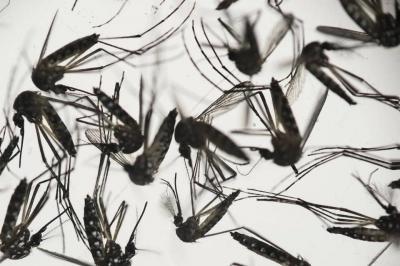 Crean ropa capaz de proteger contra el zika