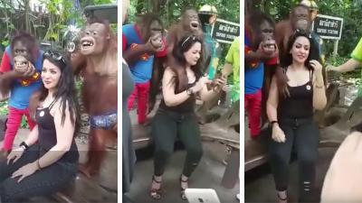 "Orangután ""abusa sexualmente"" de bella turista en Tailandia"