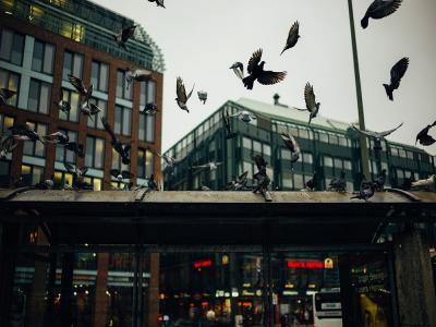 El ruido quita el apetito a los pájaros