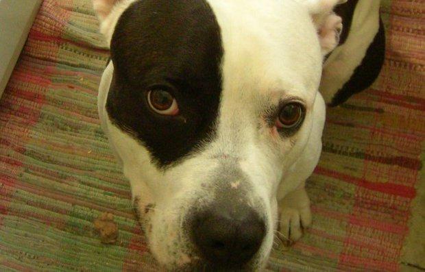 Dos niños de Maldonado pidieron un perro para cuidarlo, pero luego lo mataron a puñaladas y pedradas