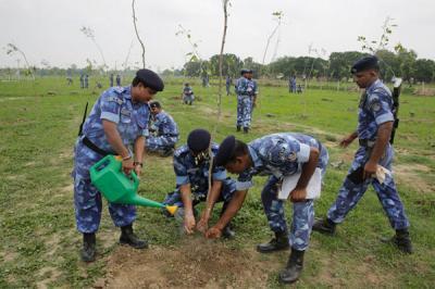 Un pueblo en India plantó casi 50 millones de árboles en 1 día