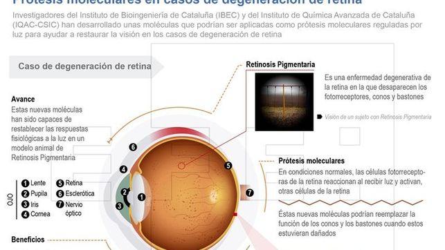 Desarrollan moléculas que ayudan a restaurar la degeneración de retina