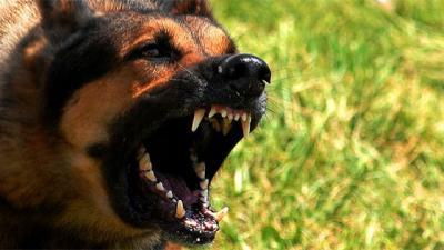 Perros salvajes atacan y arrastran a mujer en Canelones; está internada grave