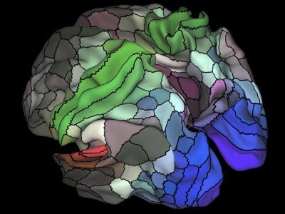 Un nuevo mapa identifica 97 zonas desconocidas del cerebro