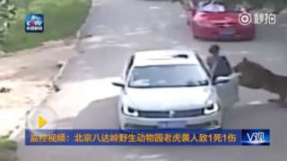 Tigres matan a una mujer e hieren a otra en un safari en Pekín