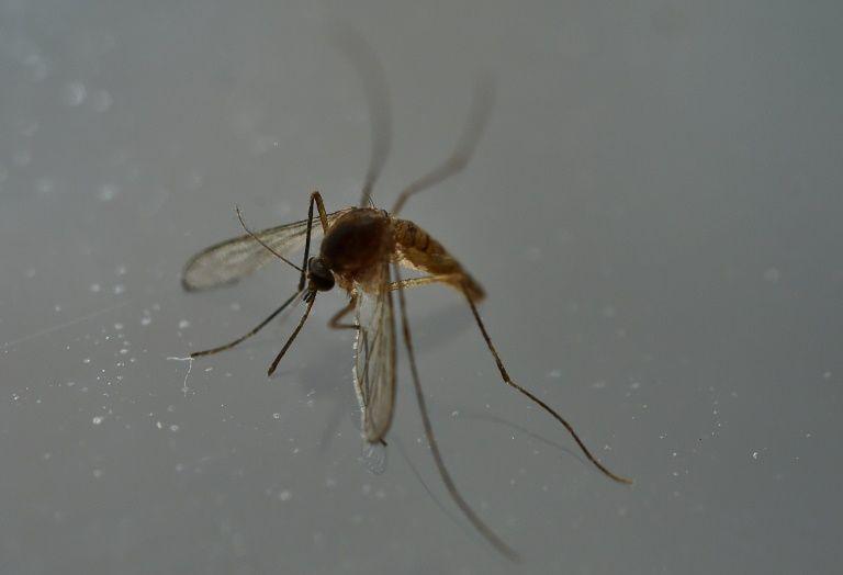 Nace el primer bebé con microcefalia por zika en Europa