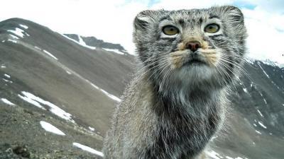 """Estas podrían ser las últimas fotos del """"gato más sigiloso del mundo"""""""