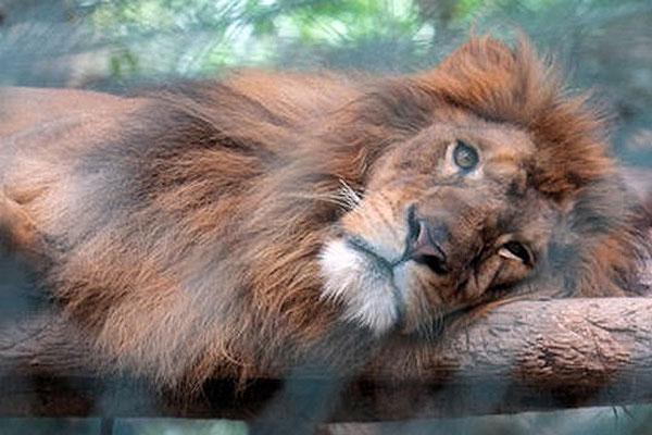 Crisis económica también afecta a zoológicos venezolanos: varios animales han muerto de hambre