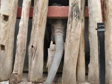 Elefante mata por accidente a niña en zoológico de Marruecos