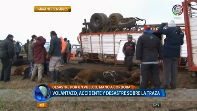 Volcó un camión con ganado y los vecinos faenaron 15 terneros en plena ruta