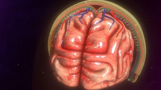 """Los """"nuevos"""" vasos sanguíneos actúan como sistema de enfriamiento del cerebro"""
