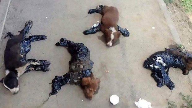 Perros embadurnados con alquitrán y abandonados al sol en Rumania