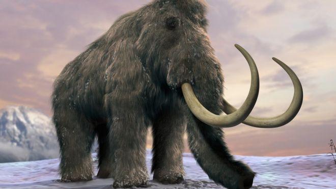 Los desesperantes días finales del último mamut de la Tierra y otros datos de su triste vida