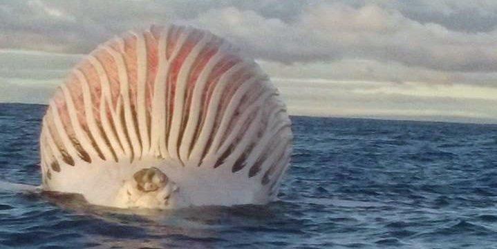 Descubren una misteriosa esfera flotante en el océano Índico