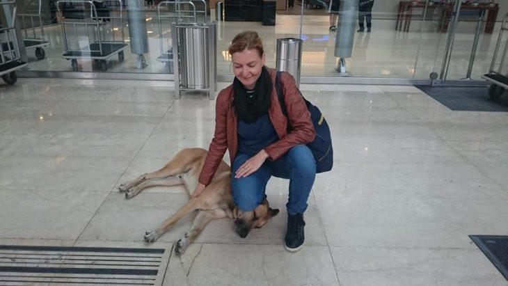 Un perro esperaba a una azafata al regresar de cada vuelo y ella lo adoptó